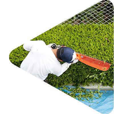 Prizma Csoport: A zöldterületek karbantartásától a növénygondozásig. Széles spektrumon vállalunk kertészeti munkákat precíz és megbízható kivitelezéssel.